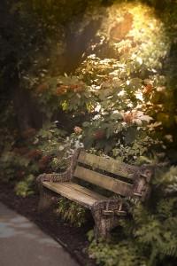 dream_bench