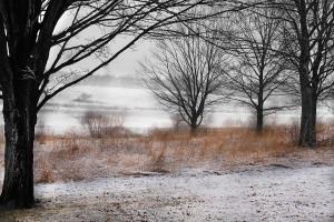 Marsh_Creek_by_Annette_Schreiber