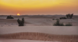 Arabien Desert, UAE